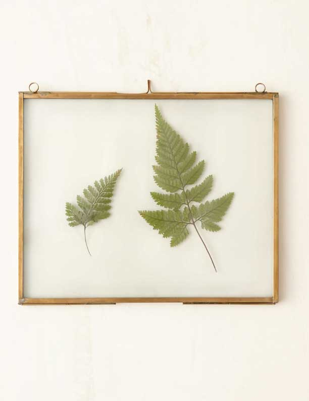 Brass-Specimen-Frame-from-Terrain